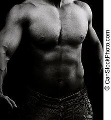 imagem corpo, macho, artisticos, muscular