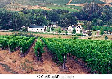 imagem, sul, áfrica., stellenbosch, paisagem, vinhedo