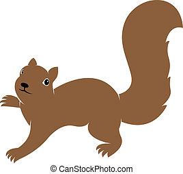 imagem, vetorial, esquilo