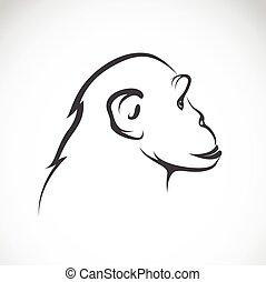 imagem, vetorial, fundo, chimpanzé, branca