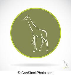 imagem, vetorial, Girafa