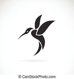 imagem, vetorial,  Hummingbird