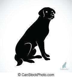 imagem, vetorial, labrador, cão