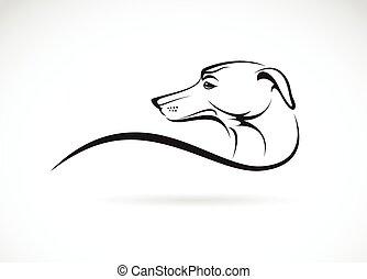 imagen, (azawakh), perro, vector, plano de fondo, blanco