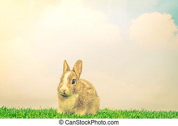 imagen, conejo, ), filtrado, effect., feriado, vendimia, pasto o césped, pascua, verde, (, procesado