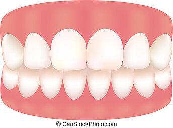 imagen, diente