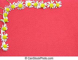 imagen, fieltro, camomile, flores, plano de fondo, rojo