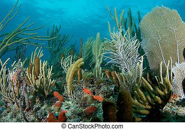 imagen, florida., barrera coralina, tomado, este, compostion...