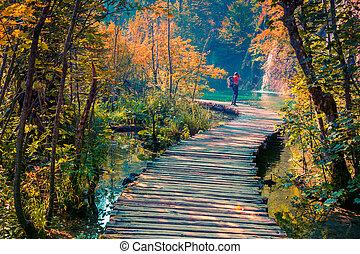 imagen, fotógrafo, plitvice, lagos, nacional, toma, parque