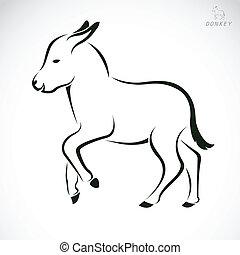 imagen, vector, burro