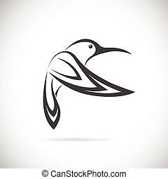 imagen, vector, diseño, plano de fondo, blanco, colibrí