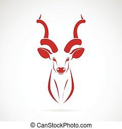 imagen, vector, kudu