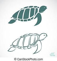 imagen, vector, tortuga