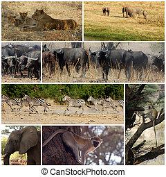 Images from savannah - Tanzania - Africa
