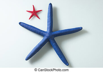 star fish - images of the star fish on the plain background