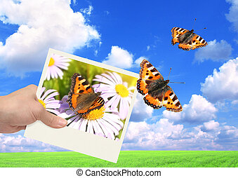 Imagination - Hand with photo and butterfly. On background...