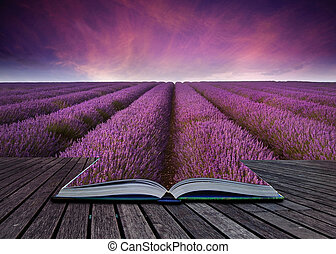 imaginativo, imagen, campo lavanda, libro, venida, páginas,...