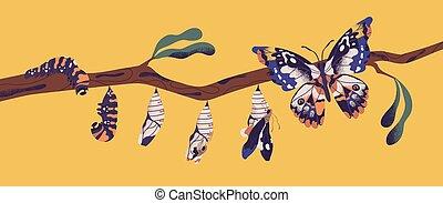 imago, processo, larva, eclosion., crescimento, pupa, metamorfose, -, winged, branch., transformação, borboleta, apartamento, vida, coloridos, inseto, caricatura, ciclo, illustration., lagarta, árvore, vetorial, fases
