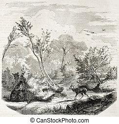 imboscata, in, capriolo, caccia