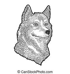 imitation., image., heiser, gezeichnet, kratzer, schwarz, design., kleidung, brett, illustration., hund, weißes, stich, skizze, hand druck, vektor, t-shirt
