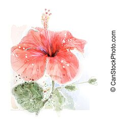 imitation of watercolor illustration of red hibiscus