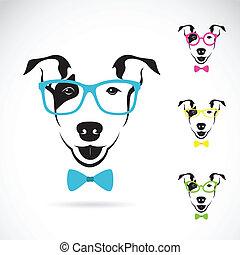 immagine, cane, terrier), vettore, fondo, bianco, (bull, occhiali