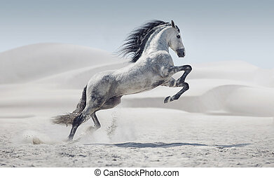 immagine, cavallo, bianco, presentare, galloping