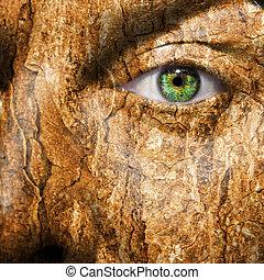 immagine, corteccia, pelle, concettuale, faccia