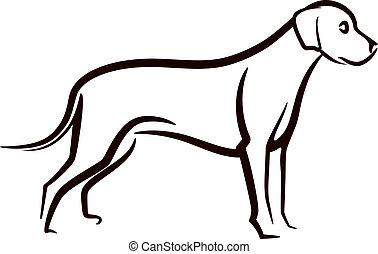 immagine, labrador, fondo, vettore, cane, bianco