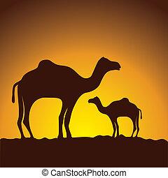 immagine, roulotte, cammelli, vettore