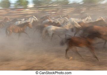 immagine vaga, di, uno, gregge, cavalli, in, motion.