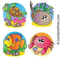 immagini, marino, 1, animali, vario