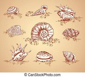 immagini, seashell, grafico, collezione