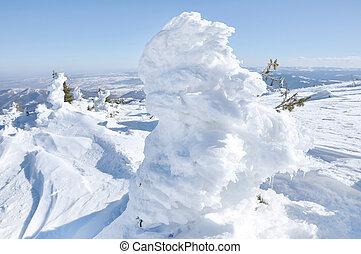 immergrün, tanne, bedeckt, per, schnee