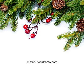 immergrün, tanne, design, weihnachten., umrandungen