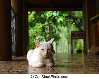 A cat on the floor awaits the rain to stop. Location: Hidden Valley Springs, Laguna, Philippines