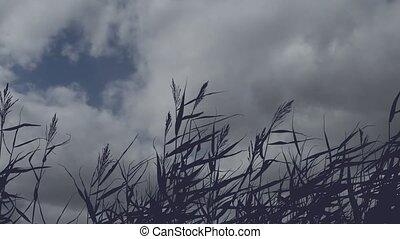 immobile, nuages, contre, en mouvement, fond, silhouette,...