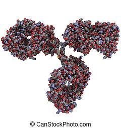 Immunoglobulin G (IgG, antibody) molecule - Chemical...