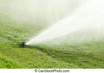 Impact sprinkler on lawn in action