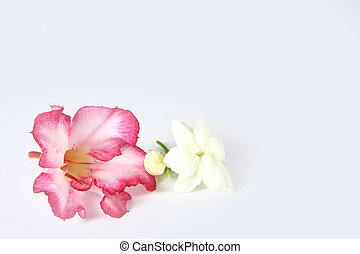 Impala lily flower and jasmine on white background