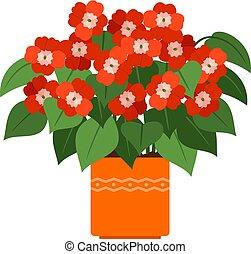 impatiens, olla, planta casa, flor