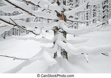 impeccable, branches