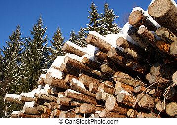 impeccable, journaux bord, pile, hiver, forêt