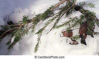 impeccable, neige, branche