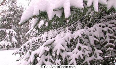 impeccable, park., neige-couvert