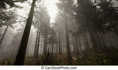 impeccable, rayons soleil, naturel, forêt