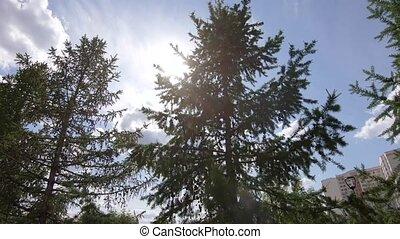 impeccable, soleil, branches