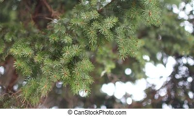 impeccable, vert, branche, vent, sways