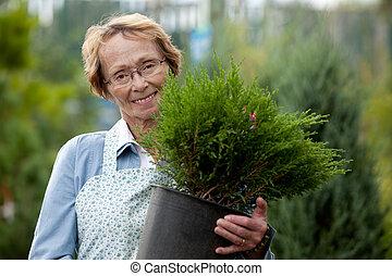 impiegato, donna senior, arbusto