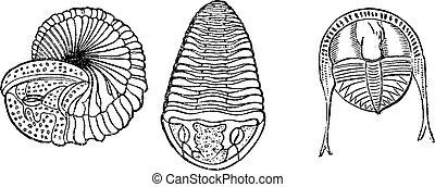 Important marine animals, Trilobites, vintage engraving.